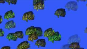 4k Aquarium fish underwater background,sea ocean fishing ecology biological. stock video