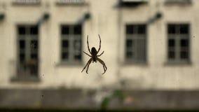 4K Araignée tenant dessus sa toile d'araignée près d'un canal à Gand, Belgique Mouvements de toile d'araignée banque de vidéos
