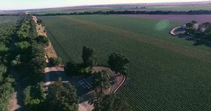 4K Arial view of the plantation stock footage