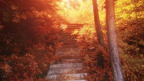 4K Autumn footage. Beauty and heavenly stairway to heaven, autumn and sunshine. Stair into forest, leaves. Religious, nature and light  jungle stock video