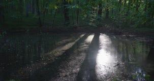 4k - Bäume und Sonnenlicht wird schön im Waldsee reflektiert stock video footage