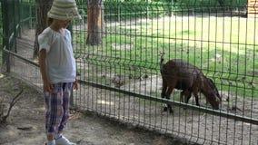 4K bambino alla capra d'alimentazione del bambino del parco dello zoo, bambina felice che gioca con gli animali video d archivio