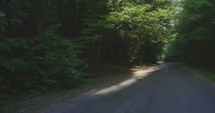 4K - Bewegen über eine Straße in einem Laubwald stock video footage
