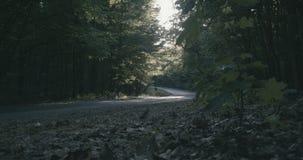4K - Bewegung über dem Boden in der magischen Morgenwaldzeitlupe stock video footage