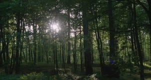 4K - Bewegung entlang dem jungen Wald am sonnigen Morgen stock video