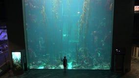 4k, a-bezoeker met reuzekelpbos wordt gesilhouetteerd in het Aquarium van Taiwan dat stock video