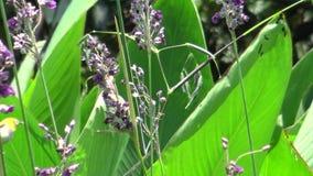 4K, blanco-ojo japonés está comiendo las plantas púrpuras de una flor en un parque de Taiwán metrajes