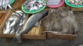 4K che vende squalo e manta nel mercato ittico di Jagalchi Mercato Busan dei frutti di mare archivi video