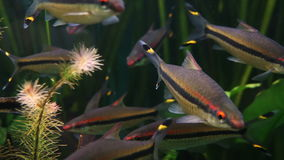 4K close up footage with fishes in aquarium stock video