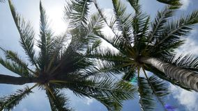 4K, Close up of swaying coconut palm tree leaves or midrib with blue sky with copy space area, loop. blue sky for summer footage. Background stock footage