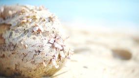 4k, close-up van zeeschelpen op een zandig strand, tegen een achtergrond van het overzees stock footage