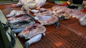 4K Close-up view of stall vendor with raw chicken meat in traditional market stock footage