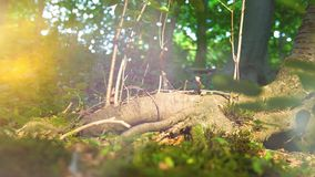 4k - Closeup of a rural Forest shows details of plants, grass and trees stock video footage