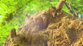 4k - Closeup of a rural Forest shows details of plants, grass and trees stock video