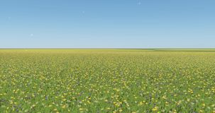 4k color flower & grass in wind,natural scenery,dandelion floating in the mid air. stock video