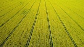 4K compilatievideo Lage vlucht en start boven verbazend bloeiend geel raapzaadgebied in de lente, luchtmening bij zonnige dag stock videobeelden