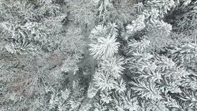 4K Compilation Video. Flight above frozen winter forest on the north, aerial view stock footage