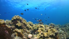 4k Coral reef with plenty fish stock video