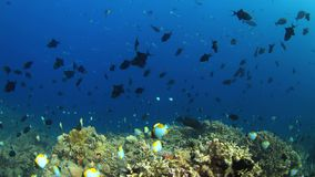 4k Coral reef with plenty fish. Colorful coral reef with plenty fish. 4k footage stock footage