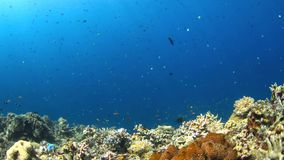 4k Coral reef with plenty fish stock video footage