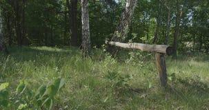 4K - daling op het gras langs een groep berken in een mooi bos stock videobeelden