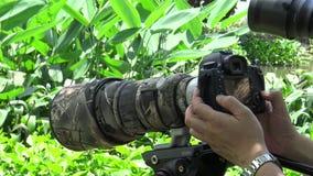 4k de Aziatische Fotograaf neemt beelden van het wild met DSLR-camera stock footage