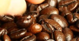 4k de boon van de oogstkoffie met de hand, boon van het voedsel de materiële, heerlijke schotels van de drankencafeïne stock videobeelden