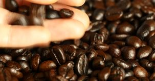 4k de boon van de oogstkoffie met de hand, boon van het voedsel de materiële, heerlijke schotels van de drankencafeïne stock footage