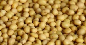 4k de close-up van sojaboonbonen, de grondstof van het zadenvoedsel, de heerlijke boon van het schotelszaad stock video