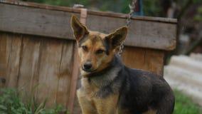 4K de hond ontschorst stock video