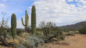 4K de mening van UltraHD Timelapse van de Sonoran-Woestijn stock videobeelden