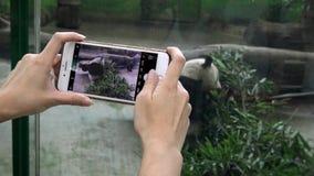 4K den asiatiska flickan tar fotografiet med kameratelefonen av pandabjörnen som äter bambu stock video