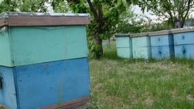 4K der Abschluss herauf Schuss der fliegenden Bienen nahe ihren Häusern stock video footage