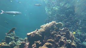 4K, diversa especie de opinión subacuática de los pescados Coral Reef en acuario metrajes