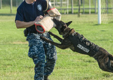 K9 dog training. Us navy seaman and dog training of kilo 9 unit during the National Night Out 2013 in Sigonella stock images
