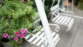 4K dois balanços vazios do branco que balançam em um jardim verde com as flores cor-de-rosa bonitas para relaxar filme