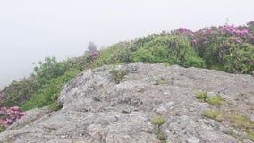 4k duw in Mist die over Rododendronbloei blazen stock footage