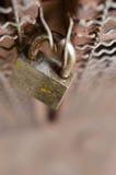 Kędziorka drzwi Zdjęcia Stock