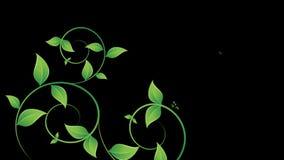 Kędziory zielony ulistnienie zbiory