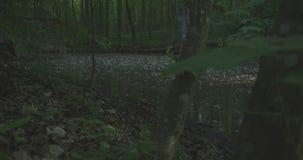 4K - Ein See in einem ruhigen Morgenwald, Zeitlupe stock video