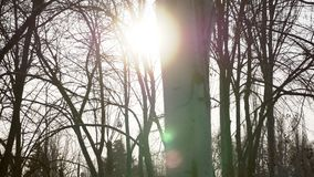 4K ekranizują strzał zimy biała brzoza z blitch słońce zbiory