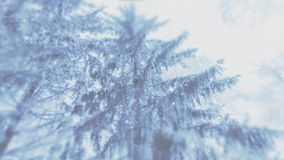 4K empañó el fondo video de la ventisca o de nevadas fuerte en el bosque de la picea ilustración del vector