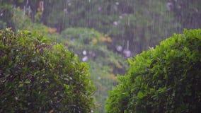 4K er is een sterke de zomer tropische regen op de achtergrond stock video