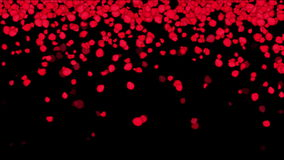 4k Falling rose petals wedding Valentine`s Day background. 6760_4k stock video footage