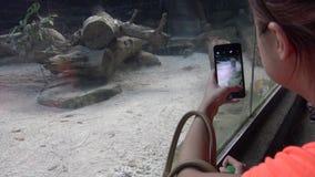 4K, femme asiatique prenant la photographie avec le téléphone de caméra du puma dans le zoo clips vidéos
