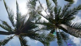 4K, fim acima da palmeira de balanço do coco sae ou nervura central com o céu azul com área de espaço da cópia, laço céu azul par filme