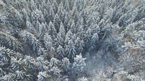 4K. Flight above snowy winter forest on the north, aerial view. stock video footage