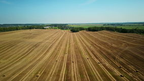 4K. Flight over cultivated fields with haystacks after harvesting. Aerial view stock video