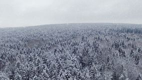 4K. Flight and takeoff above winter forest at snowfall on the north, aerial view. stock video footage