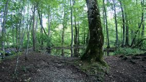 4K Floresta de árvores altas no parque nacional dos lagos Plitvice, Croácia filme